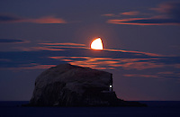 Gannet (Morus bassanus) Colony, Bass Rock and rising moon, Firth of Forth, Scotland