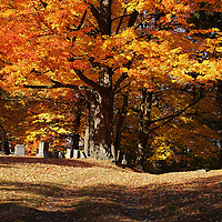 """""""Resting Under the Maples"""" <br /> <br /> Beautiful and glorious trees in autumn tower above the headstones in this cemetery!"""