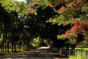 Viana, 03 de Marco de 2009...Trecho da antiga Rota Imperial, conhecida como Estrada Dom Pedro de Alcantra..Documentacao fotografica da rota historica denominada Estrada Imperial..Foto: Leo Drumond / Nitro