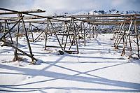 Empty cod stockfish drying racks in winter, Steine, Vestvagoy, Lofoten islands, Norway