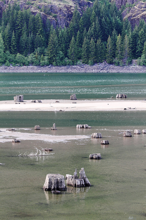 Along the shores of Buttle Lake and Upper Campbell Lake in Strathcona Provincial Park are the remains of many trees cut down years ago during periods of logging; now the park try to remove some of these each year.