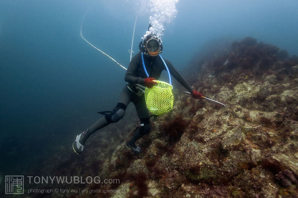 Inaba-san, the last active Ama diver in Futo harbor, making her way across the rocks as she looks for Turbo sazae sea snails, with bad weather moving in overhead, lowering light levels and visibility