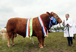 © Licensed to London News Pictures. 30/05/2014. Shepton Mallet, UK Royal Bath and West Show . Bertie from the Mells Park Trust who is the beef animal exhibitor bred champion. Photo credit : Jason Bryant/LNP