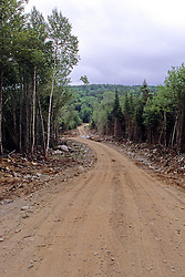 Logging Road In Forest