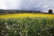 Paisaje en Milpa Alta. agosto 13 de 2015. (Foto: Prometeo Lucero)