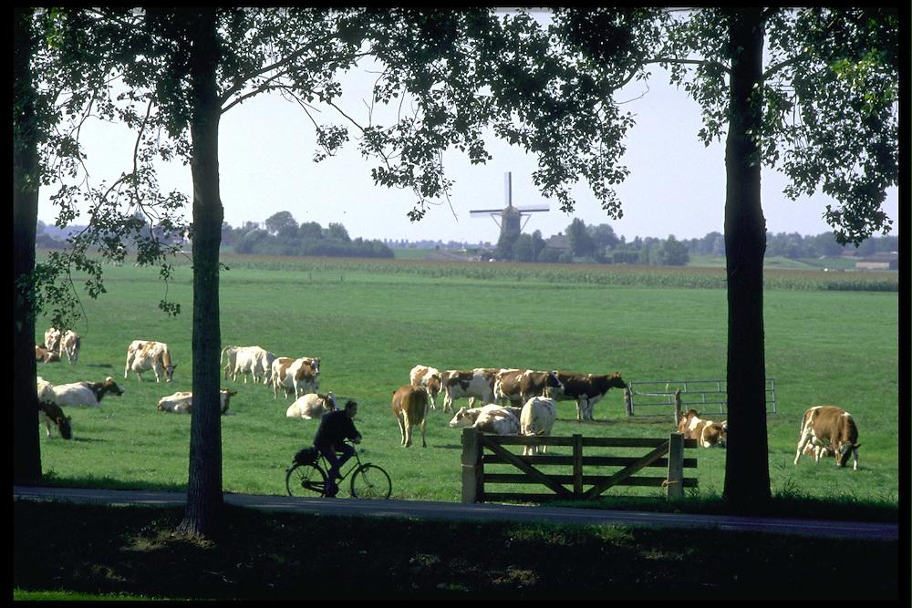 Zoeterwoude omgeving. 1¤-9-1996.Typisch landschap van het Groene Hart. Molen, koeien, grasland, fietser, bomen, allemaal in 1 plaatje. ...Foto (c) Michiel Wijnbergh/Hollandse Hoogte.