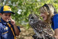 Boy in Cub Scout uniform examining barred owl, Mitchell Lake Audubon Center, San Antonio, Texas, USA.