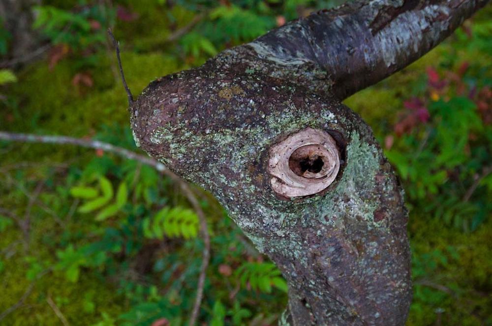 Tree, Stuart Island, San Juan Islands, Washington, US