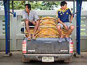 02 SEPTEMBER 2014 - BO THONG, CHONBURI, THAILAND:  SUNG (left) and AUENG, laborers on a rubber plantation in Chonburi province of Thailand, wait to sell rubber from their farm at Bothong Rubber Fund Cooperative in Bo Thong, Chonburi, Thailand. Sung said that his income has been cut by more than half because of the crisis in the rubber industry and that he hasn't been able to find a supplemental job. He said he buys less food for his family. Thailand is the leading rubber exporter in the world. In the last two years, the price paid to rubber farmers has plunged from approximately 190 Baht per kilo (about $6.10 US) to 52 Baht per kilo (about $1.60 US). It costs about 65 Baht per kilo to produce rubber ($2.05 US). A rubber farmer in southern Thailand committed suicide over the weekend, allegedly because the low prices meant he couldn't provide for his family. Other rubber farmers have taken jobs in the construction trade or in Bangkok to provide for their families during the slump.   PHOTO BY JACK KURTZ