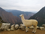 cof Machu Picchu, Peru, South America
