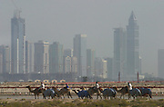 Early morning training workout for camels at the racetrack in Dubai, United Arab Emirates.