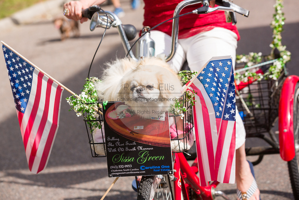 A dog rides in a bicycle basket decorated in red, white and blue during the I'On neighborhood Independence Day parade July 4, 2015 in Mt Pleasant, South Carolina.
