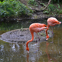Flamingos at the Pittsburgh Zoo