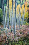 Fall color along Ohio Creek Road.