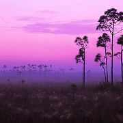 Early morning in the swamp in Everglades National Park, FL.