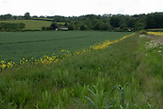 English landscape of agricultural fields with wild edges designed to attract and increase wildlife near Martley, England, United Kingdom. In ecology, edge effects are changes in population or community structures that occur at the boundary of two or more habitats. Areas with small habitat fragments exhibit especially pronounced edge effects that may extend throughout the range. As the edge effects increase, the boundary habitat allows for greater biodiversity.