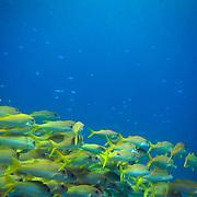 Pretty schools of fish.