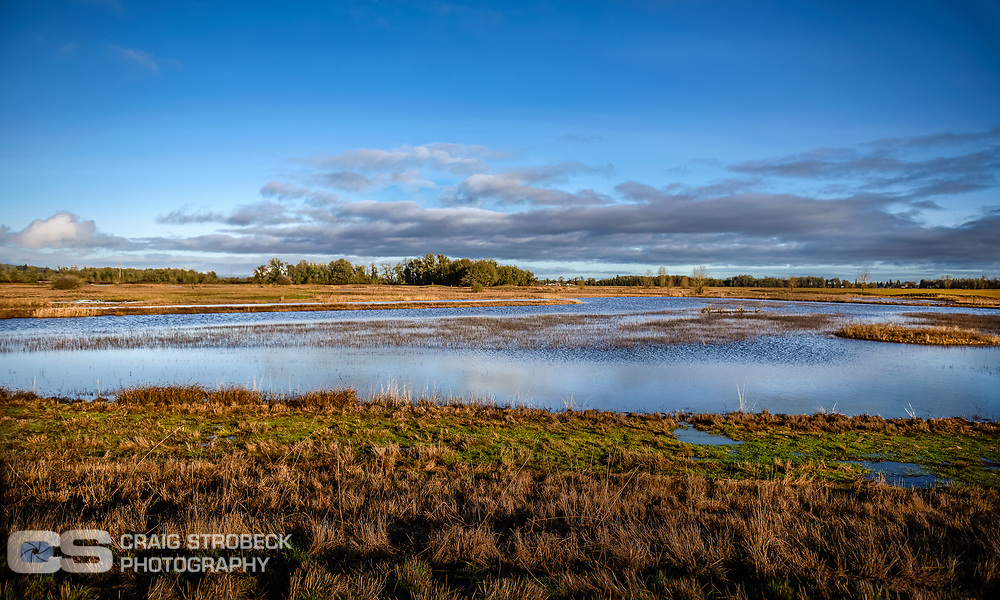 Duck Pond photographed in Lane County, Oregon.