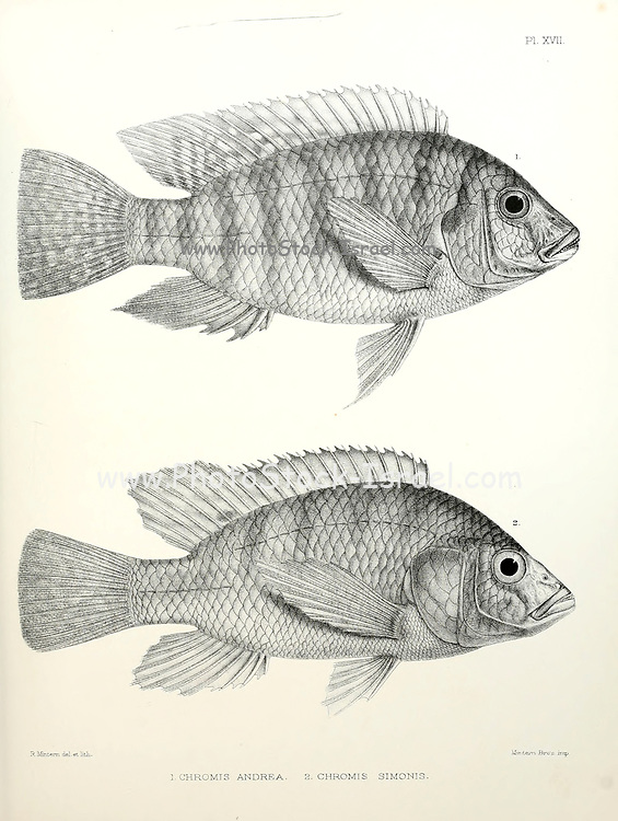 Chromis fish [Here as Chromis andrew and Chromis simonis] From the survey of western Palestine. The fauna and flora of Palestine by Tristram, H. B. (Henry Baker), 1822-1906 Published by The Committee of the Palestine Exploration Fund, London, 1884