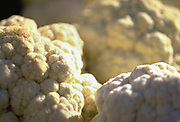 Close up selective focus photograph of a few heads of fresh cauliflower