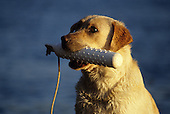 Hunting Dogs at Play Stock Photos