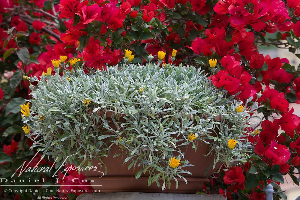 Flowers in Riomaggiore, Italy