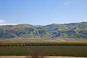 Crops and rolling hills, San Joaquin Valley, Kern County, California , USA