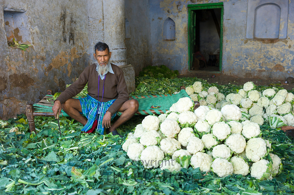 Indian Muslim man selling cauliflowers in Old Delhi at Daryagang fruit and vegetable market, India RESERVED USE
