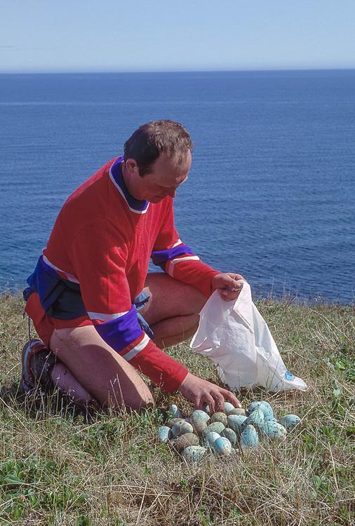 Valeriy Kononchuk sorts murres eggs gathered from a sea cliff, summer, Cape Khalyustkina, Chukostk Peninsula, Northeast Russia, 1992