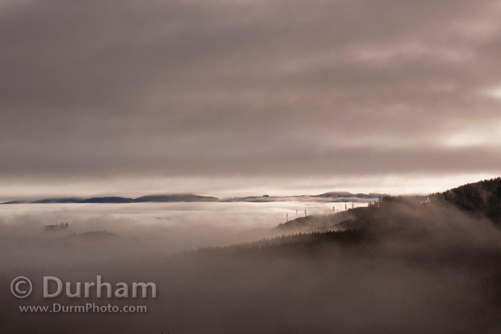 Fog envelops the coastal mountains of Clatsop State Forest, Oregon.