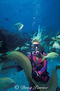 diver and green moray eel, Gymnothorax funebris, Islamorada, Florida Keys ( Western Atlantic Ocean ) Florida Keys National Marine Sanctuary MR 113