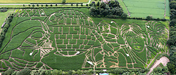 © Licensed to London News Pictures. 14/07/2017. York UK. Star Wars fan Tom Percy has carved a giant image of Darth Vader, Han Solo, C-3PO, Chewbacca & the death Star from the original Star Wars film into his field of maize near York to mark the 40th anniversary of the film release. The Maize covers over 15 acres & is believed to be the world's biggest Star Wars fan art ever created. Photo credit: Andrew McCaren/LNP