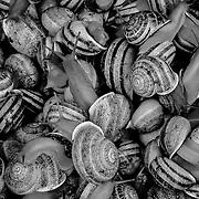 Escargot (snails) texture pattern, Marrakech, Morocco (November 2006)