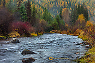 Autumn hues adorn Lolo Creek in the Bitterroot National Forest, Montana, USA