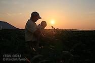 Dusty Moeller inspects soybean field with five-month-old baby Kodi at sunrise; St. Paul, Iowa.