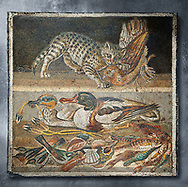 Roman mosaic of a cat catching a bird from Pompeii, Naples Archaeological Musum, Italy.  Wall art print by Photographer Paul E Williams If you prefer visit our World Gallery Print Shop To buy a selection of our prints and framed prints desptached  with a 30-day money-back guarantee and is dispatched from 16 high quality photo art printers based around the world. ( not all photos in this archive are available in this shop) https://funkystock.photoshelter.com/p/world-print-gallery .<br /> <br /> USEFUL LINKS:<br /> Visit our other HISTORIC AND ANCIENT ART COLLECTIONS for more photos to buy as wall art prints  https://funkystock.photoshelter.com/gallery-collection/Ancient-Historic-Art-Photo-Wall-Art-Prints-by-Photographer-Paul-E-Williams/C00002uapXzaCx7Y