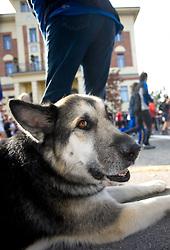 A dog at Start at 14th Marathon of Ljubljana, on October 25, 2009, in Ljubljana, Slovenia.  (Photo by Vid Ponikvar / Sportida)