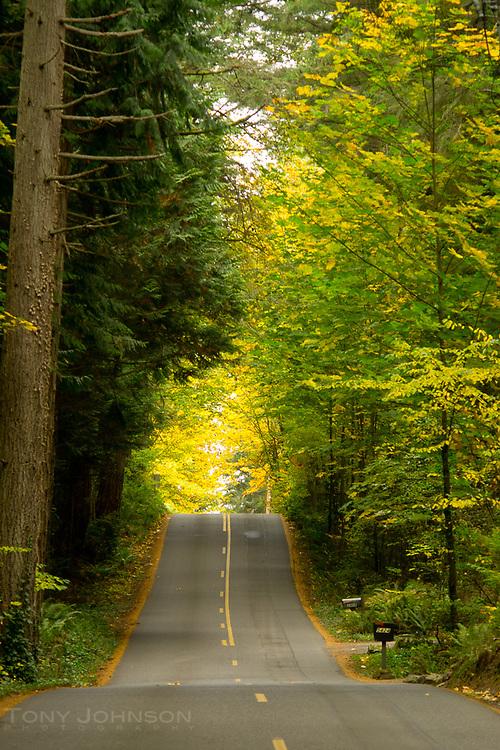 autumn on Bainbridge Island, WA