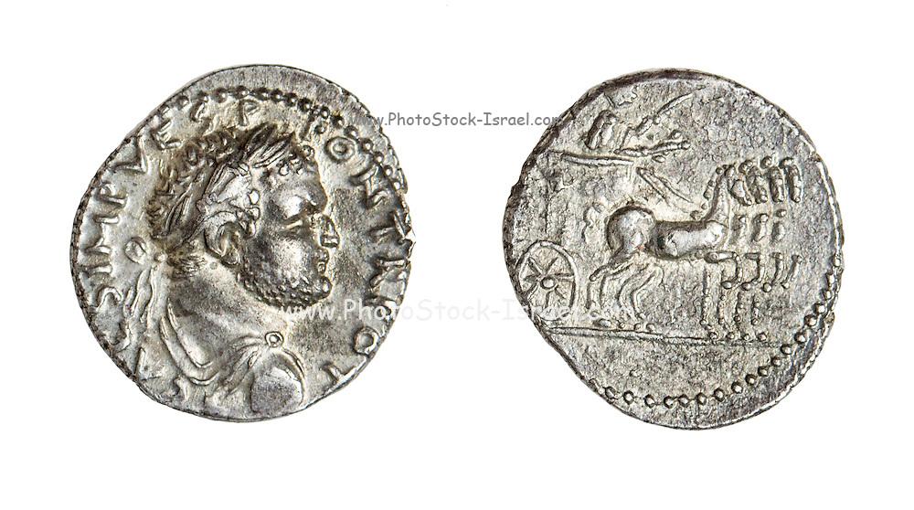 Titus 79-81 CE Silver Left, head of Titus. Right Emperor in Quadriga (4 horsed chariot)