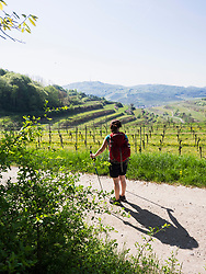 Woman hiking through vineyard terraces of Mondhalde, Baden-Wuerttemberg, Germany
