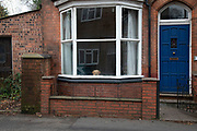 Dog looking out of the window of a home in Kings Heath in Birmingham, United Kingdom.