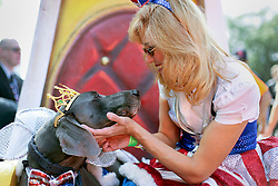 31 January 2016. New Orleans, Louisiana.<br /> Mardi Gras Dog Parade. King of Barkus, Alex the Weimarana with Diane Lundeen. The Mystic Krewe of Barkus winds its way around the French Quarter with dogs and their owners dressed up for this year's theme, 'From the Doghouse to the Whitehouse.' <br /> Photo©; Charlie Varley/varleypix.com