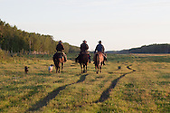 Photo Randy Vanderveen.Near Debolt, Alberta, July 22/08.Dale Thomson (grey hat), Brian King (straw hat) and Michael Dimion (black hat) head out on horse back on the North Goodwin Stock Improvement Association's lease to drive cattle into corrals so the bulls could be pulled out and any sick or injured animals could be doctored. The trio performed two drives that day --one cow-calf pairs and bulls and the second heifers and bulls.
