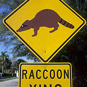 Road signs, Raccoon crossing sign on Boca Grande Barrier Island . Gulf of Mexico.
