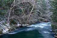Deciduous trees and some light snow over the high water of the Chilliwack River in Chilliwack Lake Provincial Park, Chilliwack, British Columbia, Canada