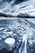 What bubbles beneath – Beautiful patterns of frozen bubbles trapped in Canada lake are highly flammable methane gas <br />
