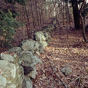 Old Stone Wall in a Massachusetts Forest