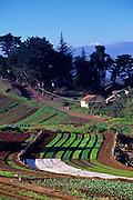 Farm, Upcountry Maui<br />