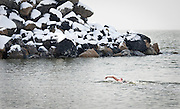Richard Edge swims during the New Year's Day Open Water Race at the Great Salt Lake Marina, Tuesday, Jan. 1, 2013. The members of the Wasatch Front Polar Bear Club have been training throughout the winter to prepare them for the 400 meter race through frigid water.