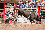 Bull rider Clayton Foltyn of Winnie, Texas is thrown from Helter Skelter at the Cheyenne Frontier Days rodeo at Frontier Park Arena July 24, 2015 in Cheyenne, Wyoming. Frontier Days celebrates the cowboy traditions of the west with a rodeo, parade and fair.